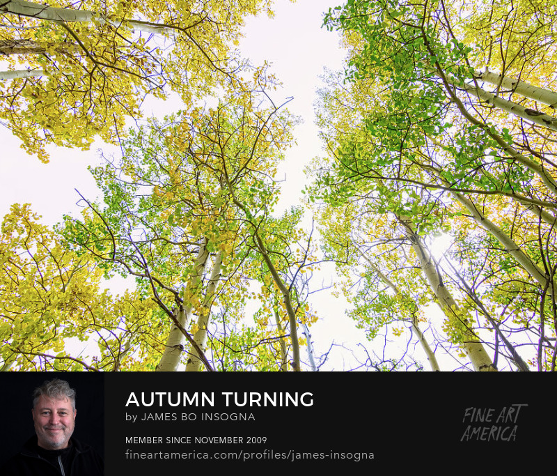 Autumn Turning Photography Prints