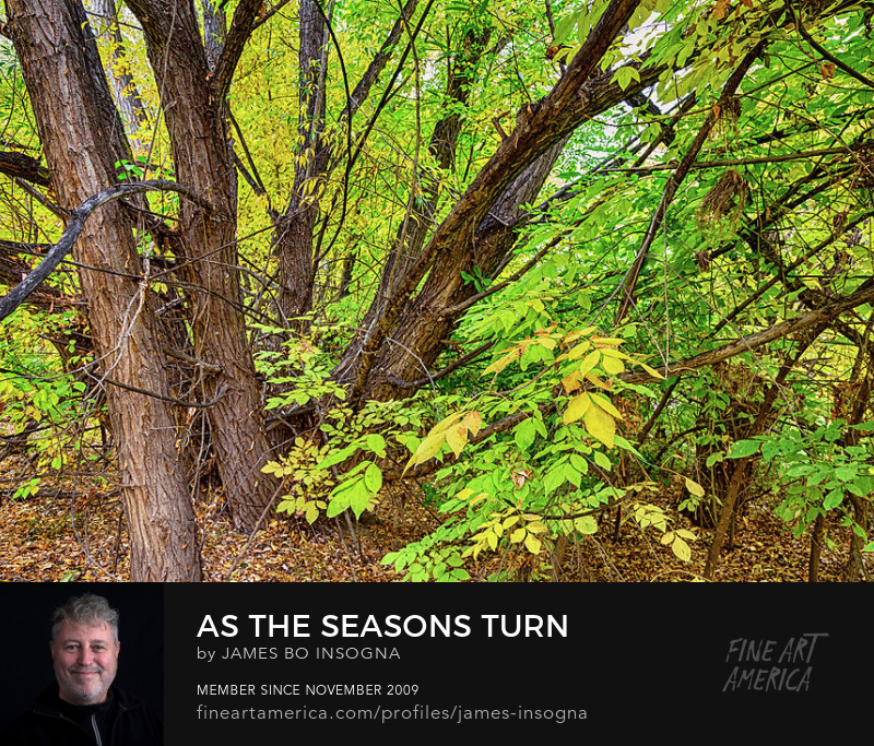 As The Seasons Turn Art Prints