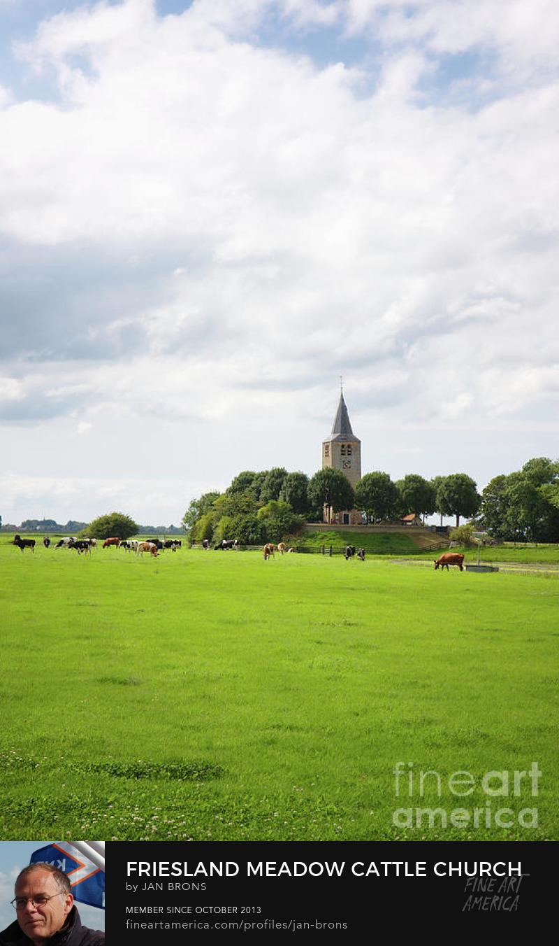 Friesland meadow cattle church - Art Print