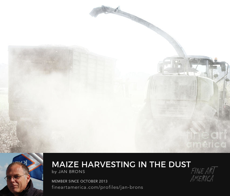Maize harvesting in the dust - Art Online