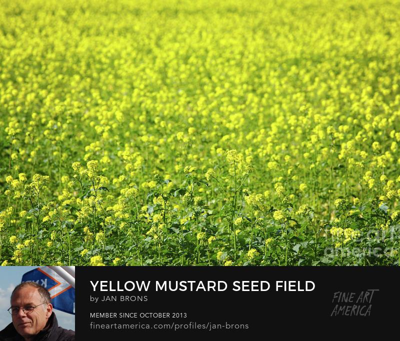 Yellow Mustard Seed Field - Art Online