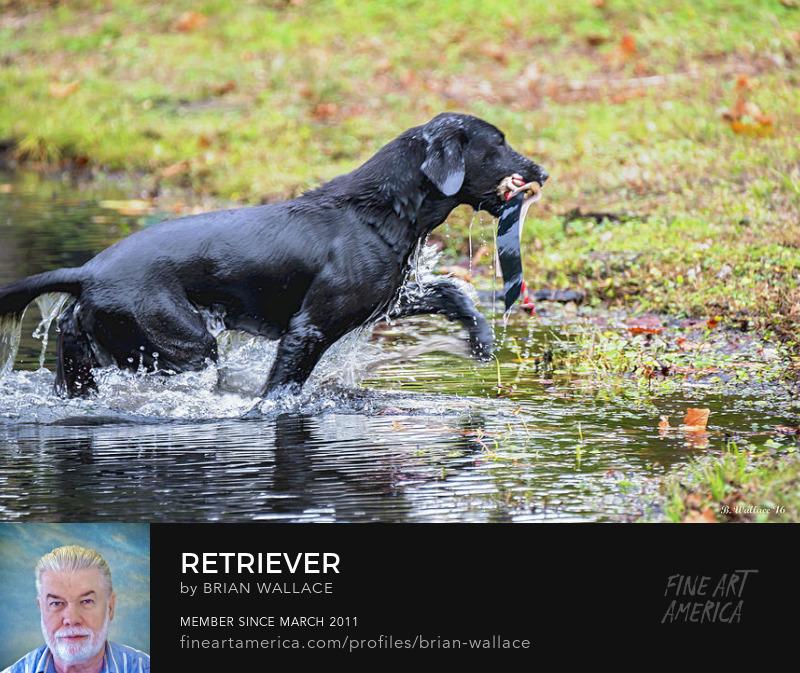 Retriever by Brian Wallace