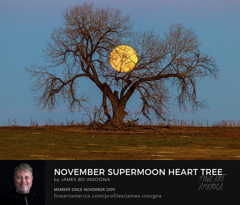 November Supermoon Tree Art Online