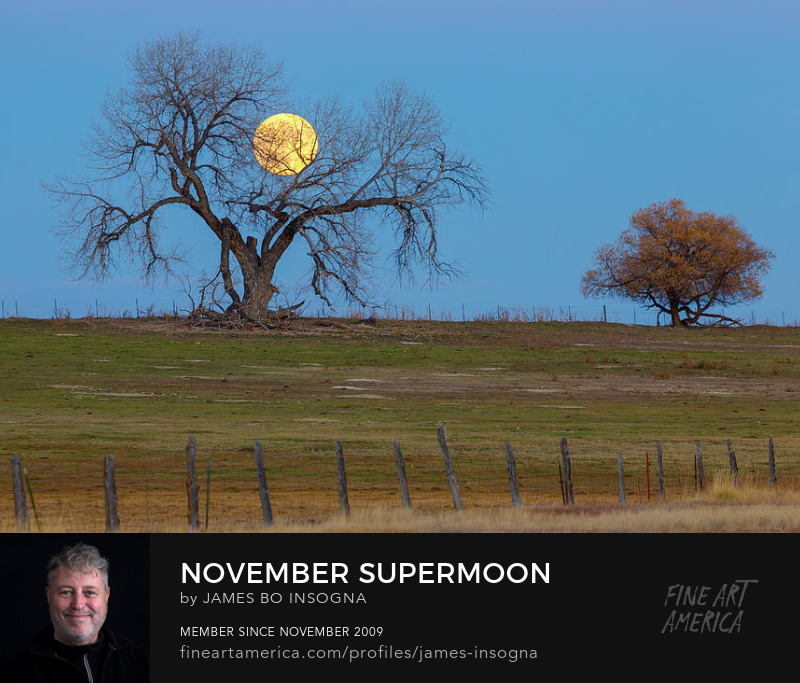 November Supermoon Art Prints