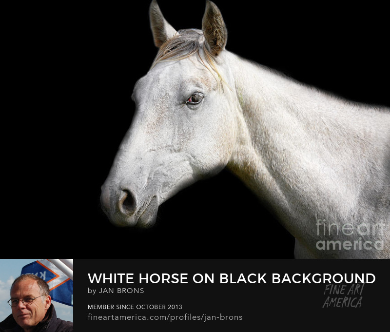 White Horse on Black Background -  Art Online