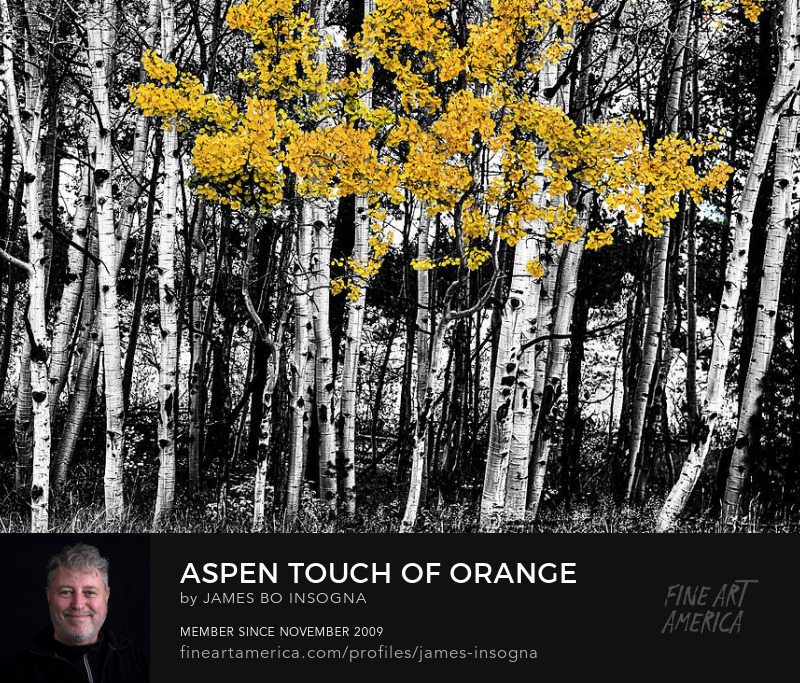 Aspen Touch Of Color Art Prints