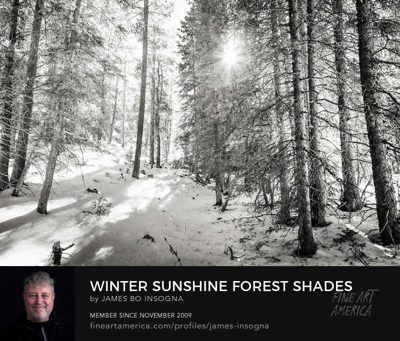Winter Sunshine Forest Shades Of Gray Photography Prints