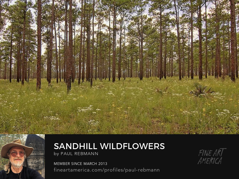 View online purchase options for Sandhill Wildflowers by Paul Rebmann