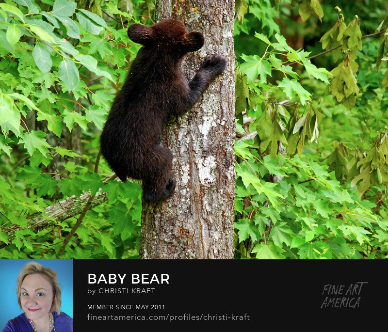 Tiny Black bear cub with big ears feeding on a tree trunk
