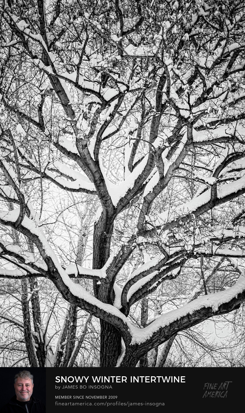 Snowy Trees Winter Intertwine Photography Prints