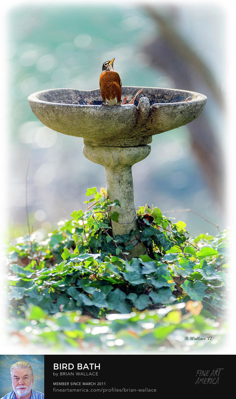 Bird Bath by Brian Wallace