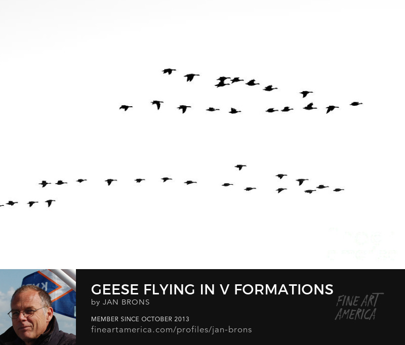 Geese flying in V formations - Art Online