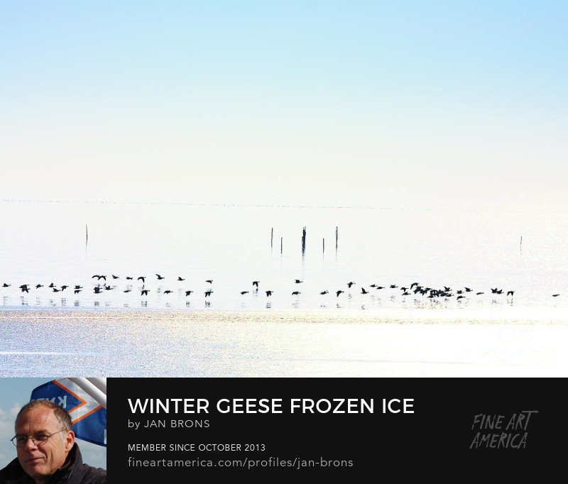 Winter geese frozen ice - Photography Print