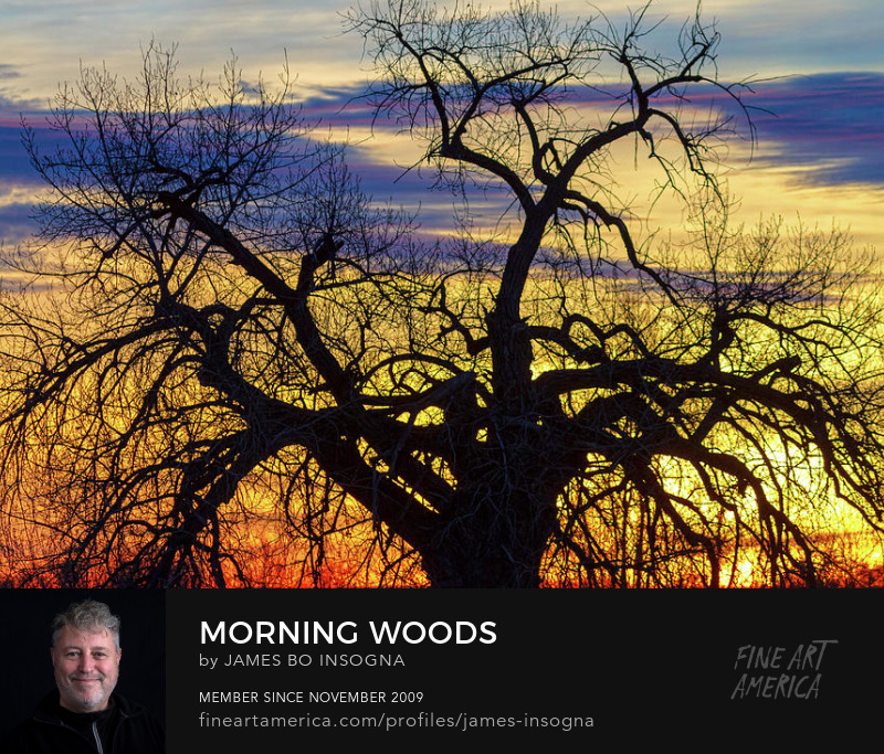 Morning Woods Art Prints