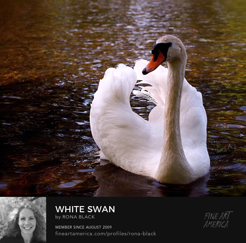 White Swan � Rona Black