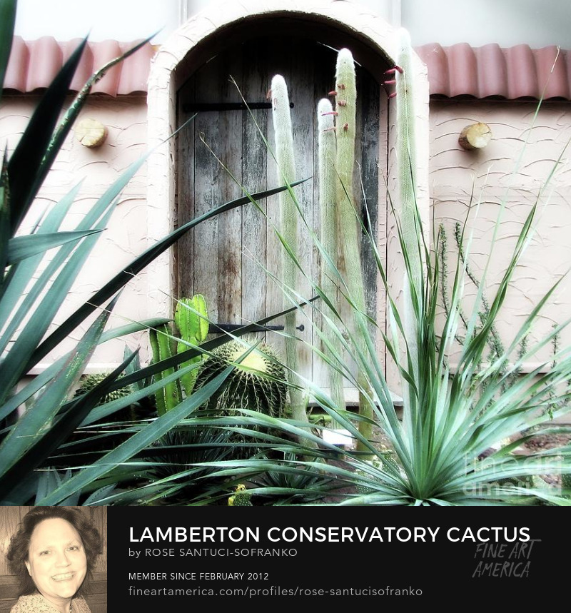 Lamberton Conservatory Cactus Room Rochester New York Photography Prints