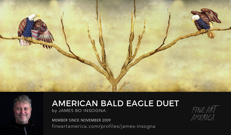 American Bald Eagle Duet Photography Prints