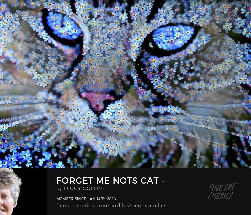 forgetmenots cat
