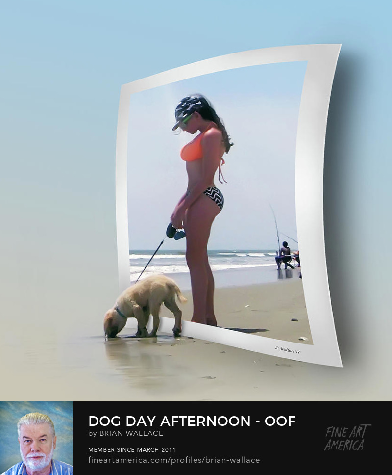 Dog Day Afternoon OOF by Brian Wallace