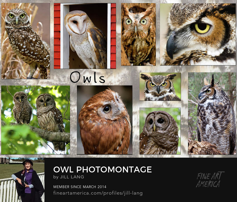 Collection of owl photos