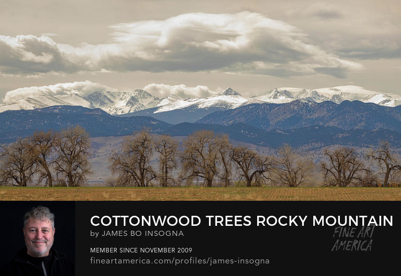 Rocky Mountain Cottonwood Trees View Art Prints