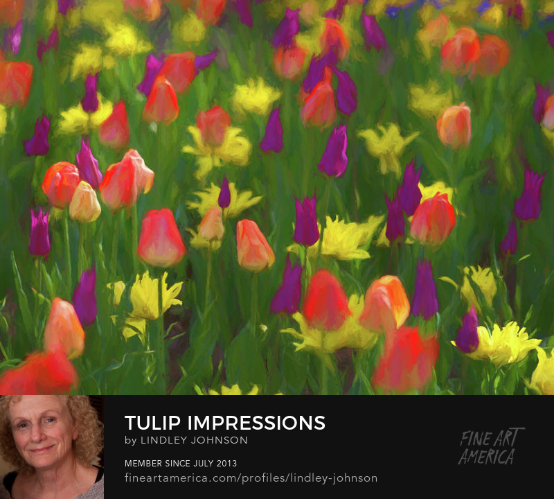 tulip impressions by lindley johnson