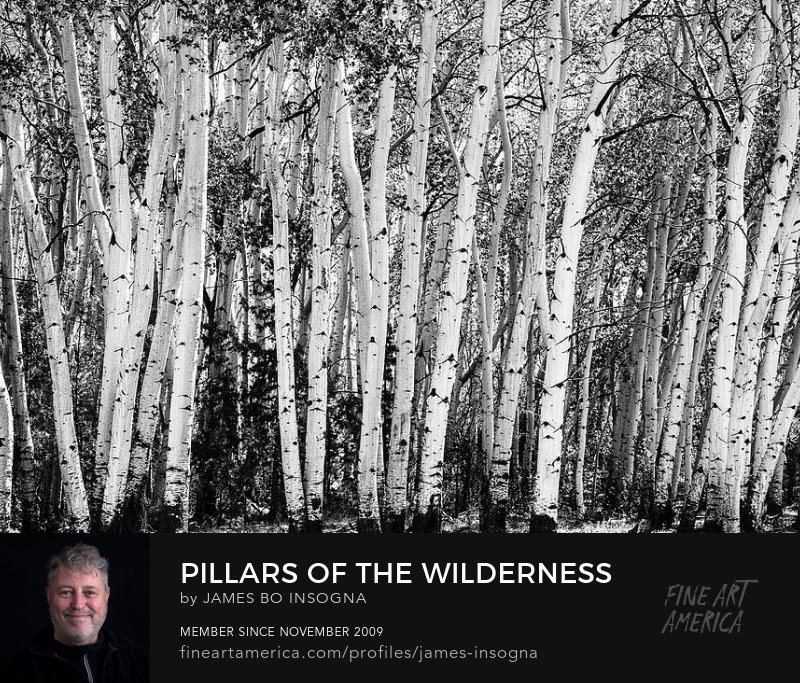 Pillars Of The Wilderness Photography Art Prints