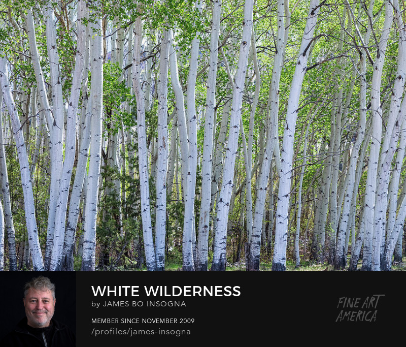 White Colorado Forest Art Online