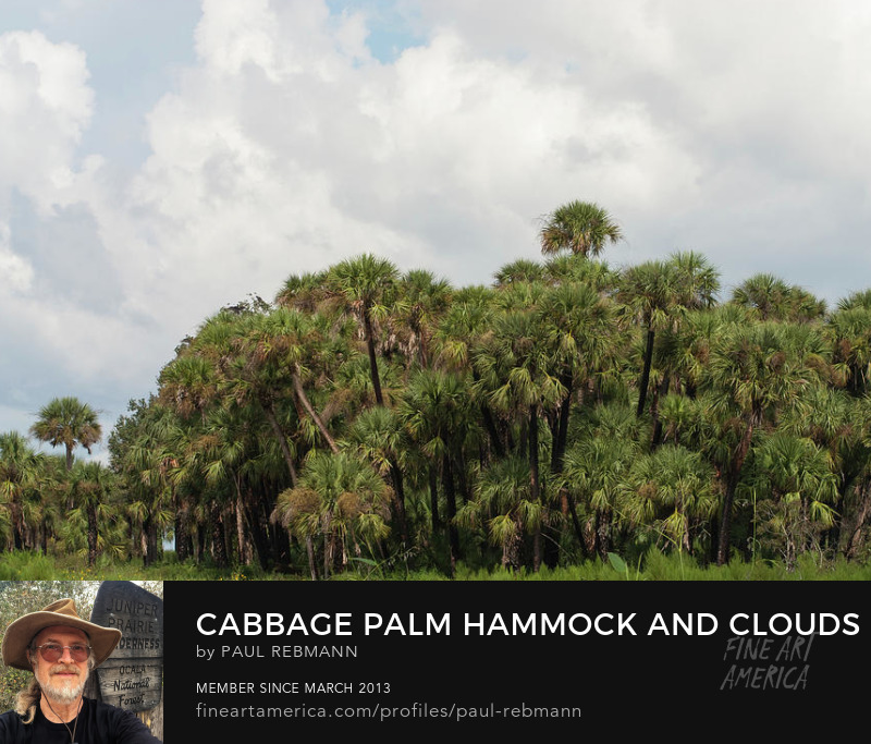 View online purchase options for Cabbage Palm Hammock and Clouds by Paul Rebmann