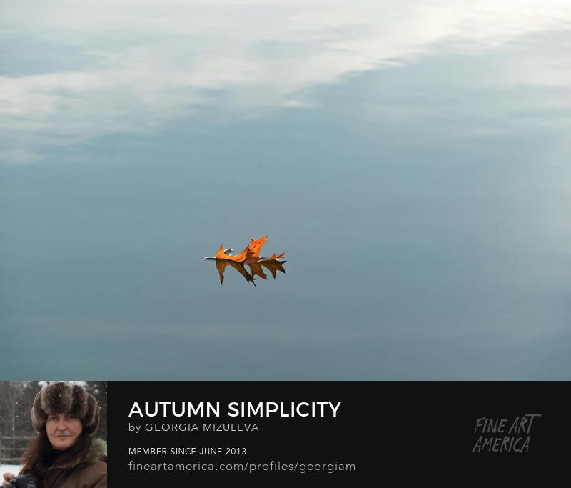 Autumn Simplicity Photograph by Georgia Mizuleva