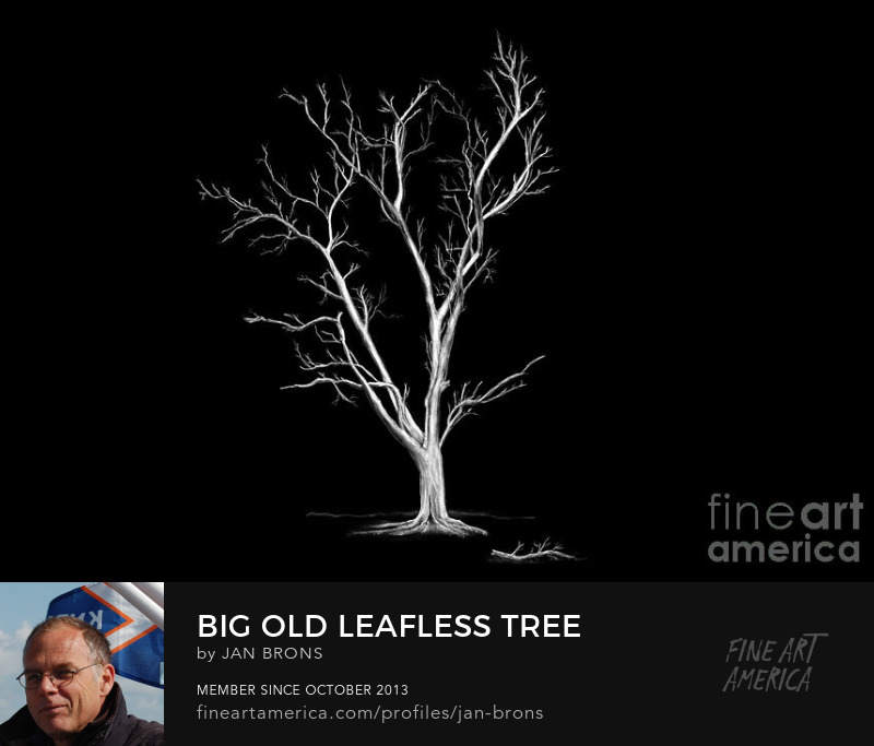 Art Online - Big Old Leafless Tree