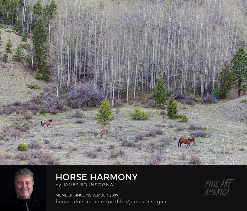 Three Horse Harmony Photography Prints