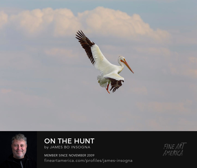 Pelican On The Hunt Wall Art Prints