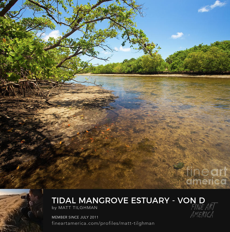 Tidal Mangrove Estuary Photography Prints