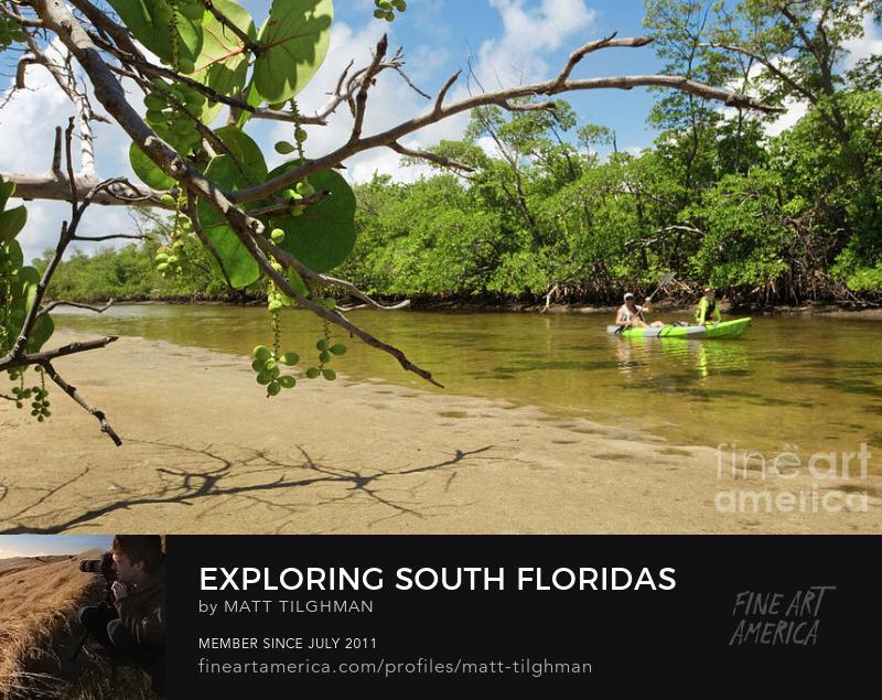 Father and Son Kayaking Florida Art Prints