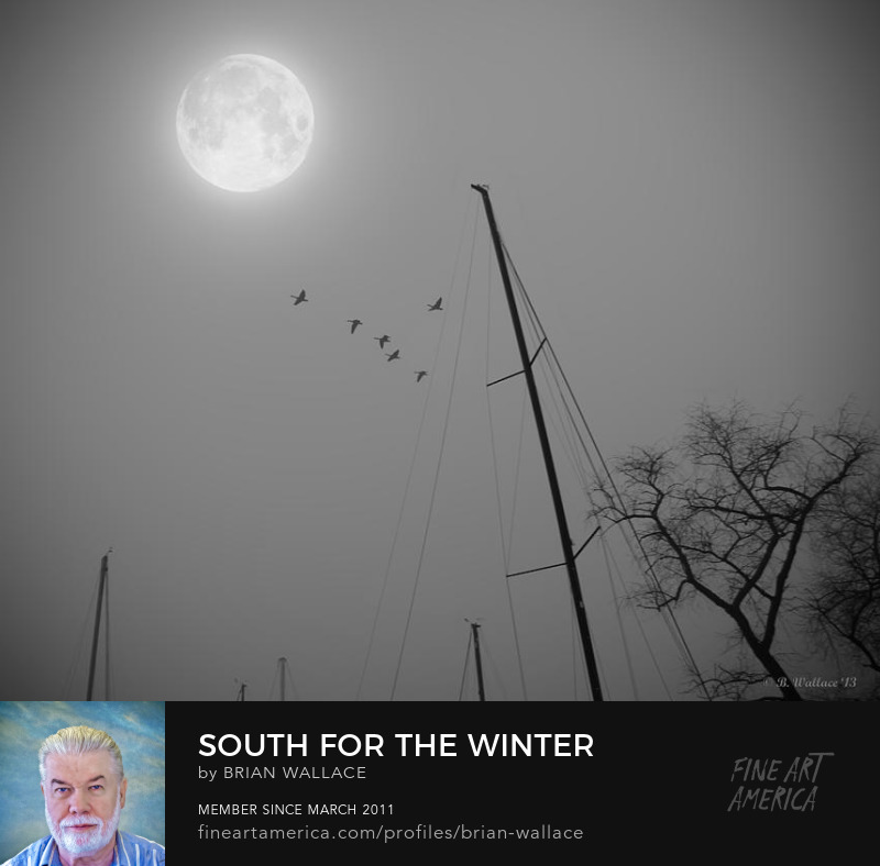 South For The Winter by Brian Wallace