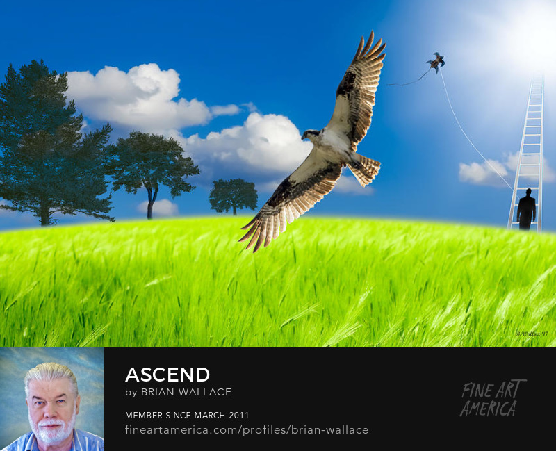 Ascend by Brian Wallace