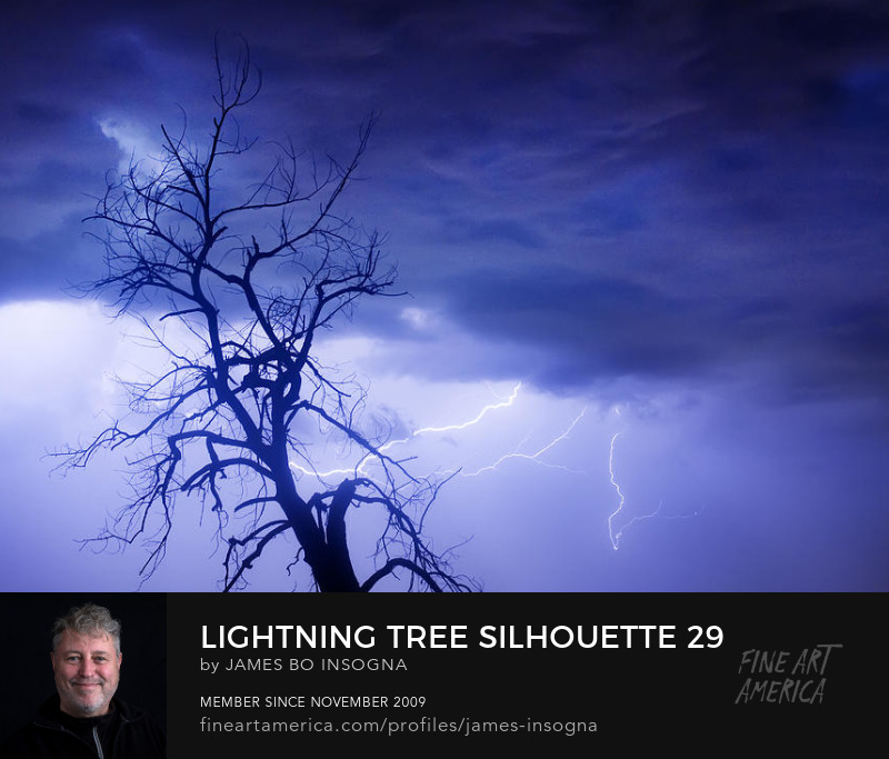 Lightning Tree Silhouette 29 Photography Art Print