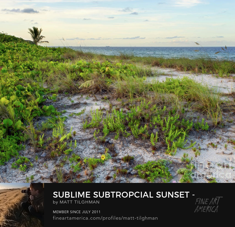 Natural Florida Coastline Sunset Art Prints