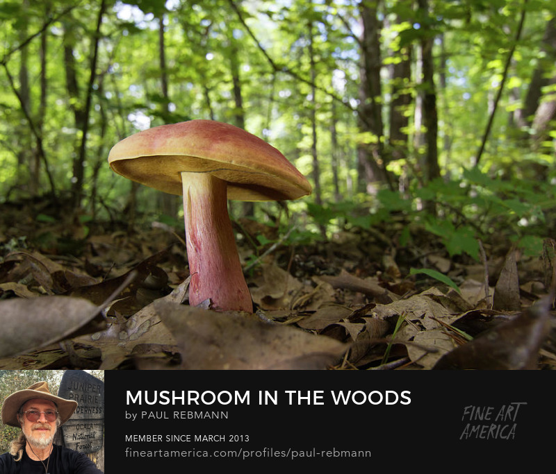 View online purchase options for Mushroom in the Woods by Paul Rebmann