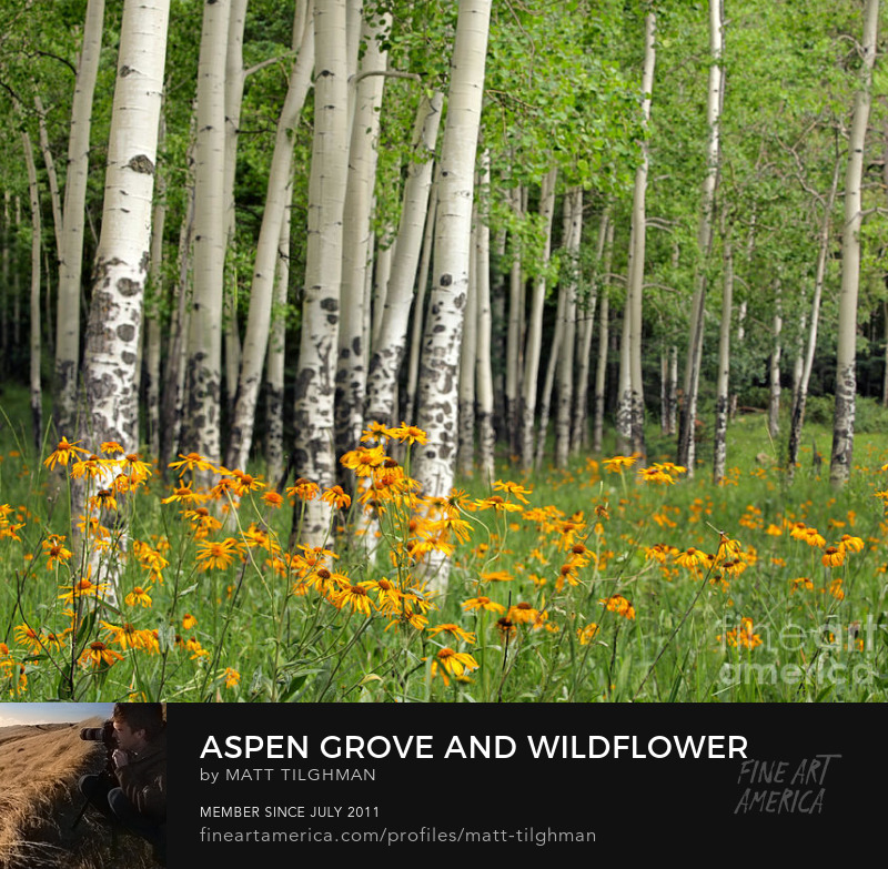 Aspen Grove Wildflower Meadow Art Online