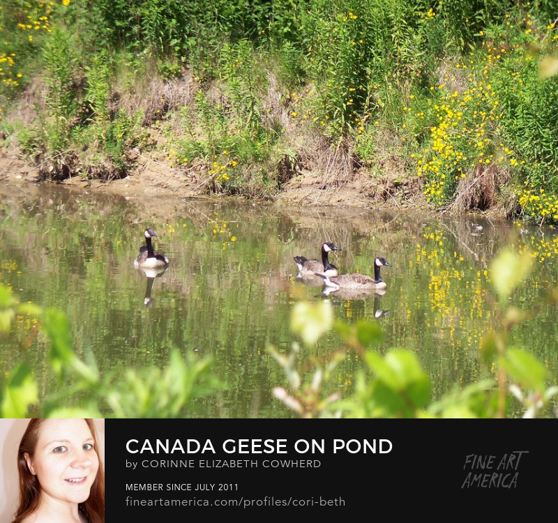 Canada Geese on Pond by Corinne Elizabeth Cowherd
