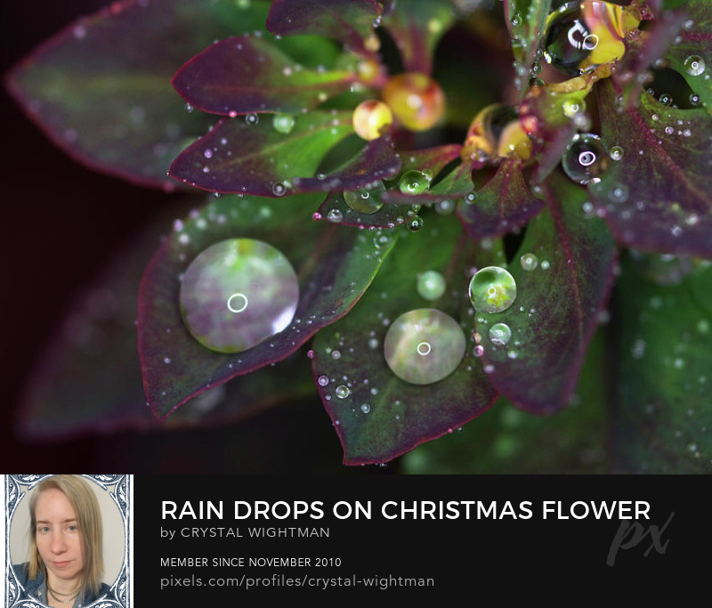 Water Drop Photography- Macro photo of water drops on a beautiful flower display.