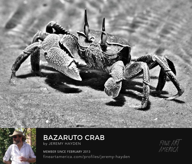 Black and White Crab Prints for Sale