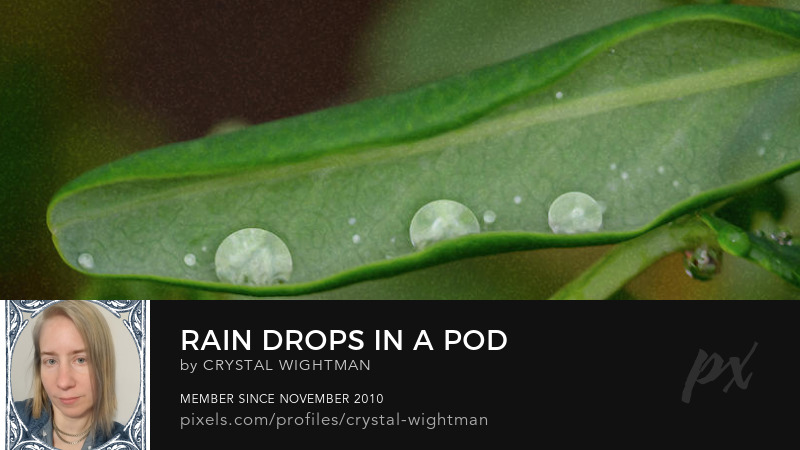 Three water drops in a green leaf pod.