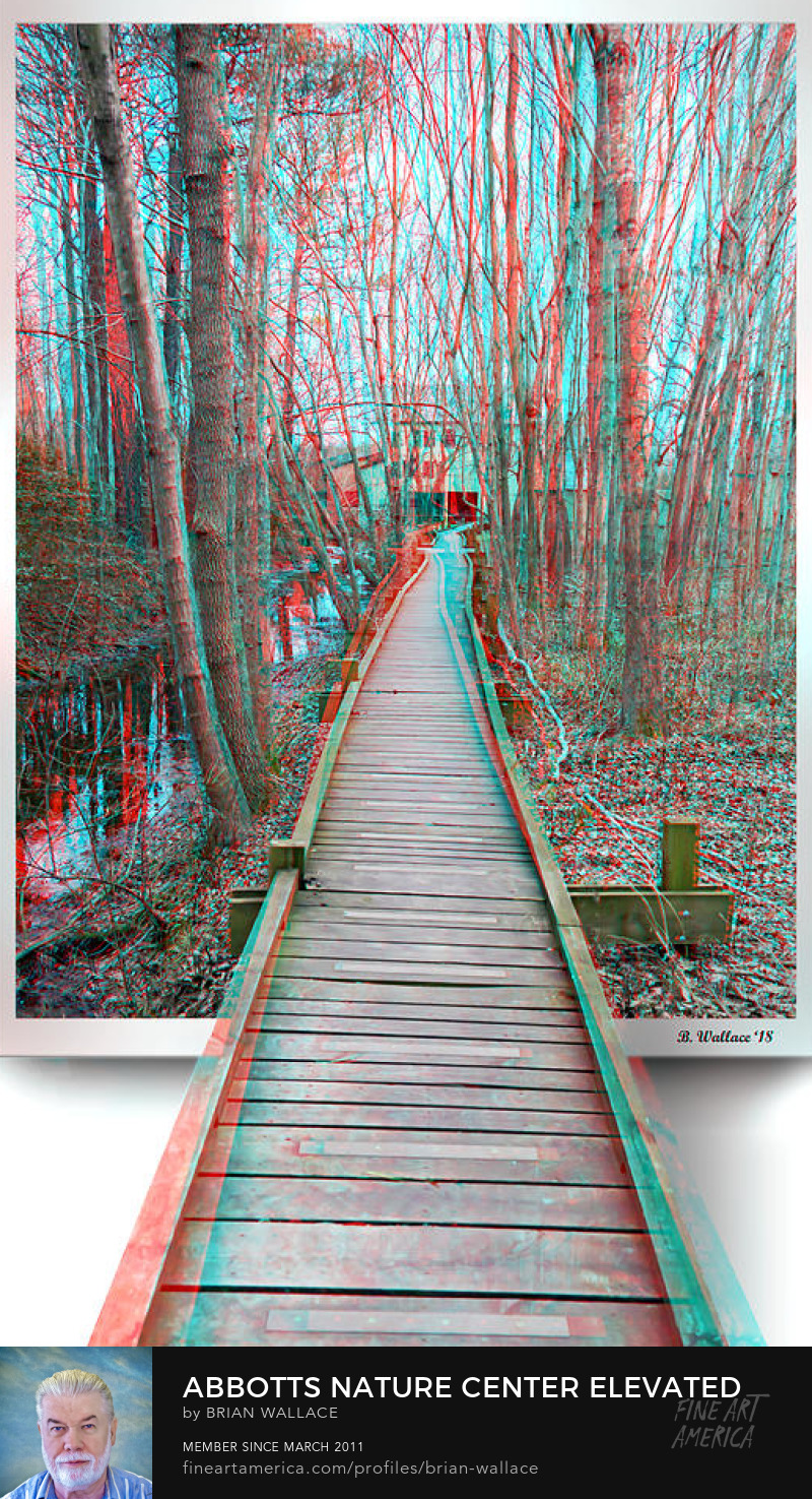 Abbotts Nature Center Elevated Trail - Anaglyph by Brian Wallace