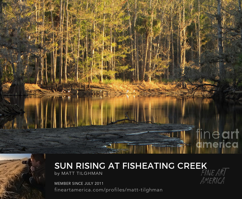 Sun Rising at Fisheating Creek Florida Photography Prints