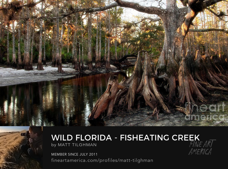 Wild Florida Fisheating Creek Art Prints