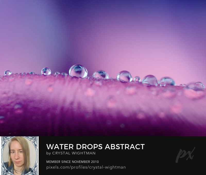 Water Drop Photography - Rain drops balancing on a puple flower.