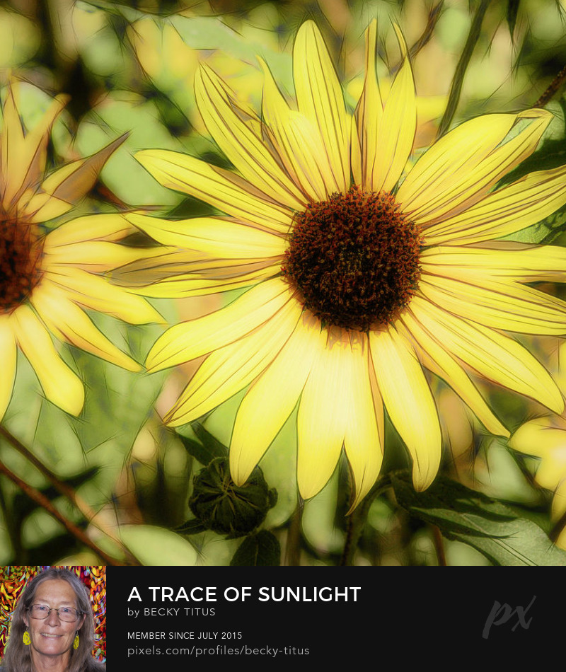 A Trace Of Sunlight by Becky Titus' title=